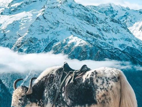 Тур из Вологды в новогодние каникулы «Новый год на крыше Кавказа: от Домбая до Эльбруса»